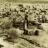 Urfa'da Emeviler Devri