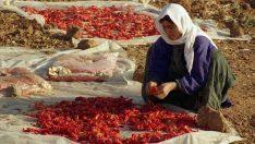 Urfa Kadınları