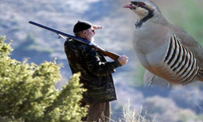 Avcılık Ve Keklik
