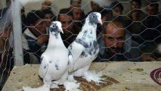 Siverek'te, güvercin fiyatları şaşırtıyor