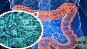 Bağırsak bakterileri diyabetin gelişiminden sorumlu olabilir