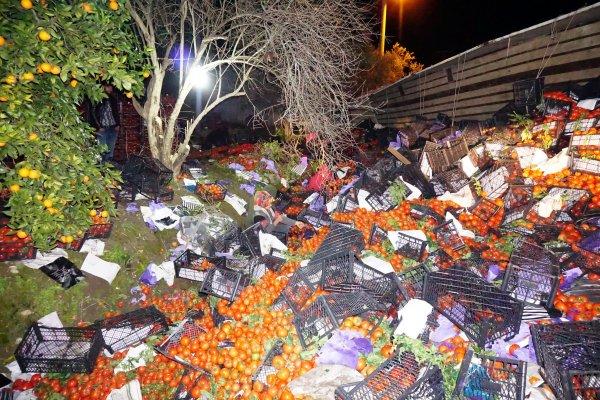 25 ton domates yüklü tır devrildi