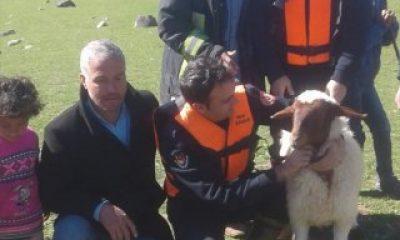 Kayalıkta mahsur kalan kuzu botla kurtarıldı