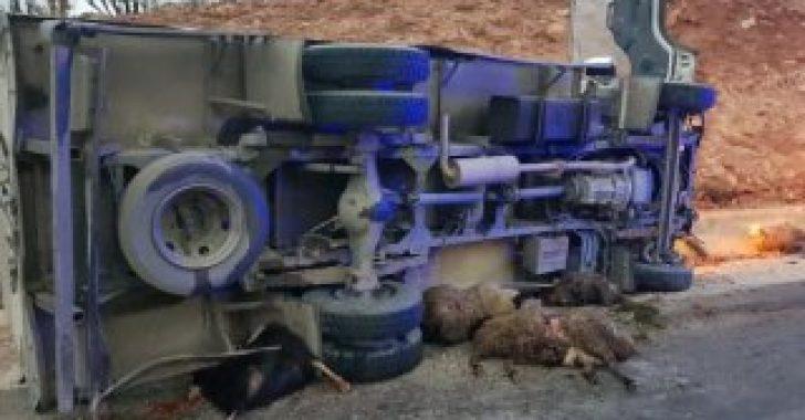 Diyarbakır'da kamyon koyun sürüsüne çarptı
