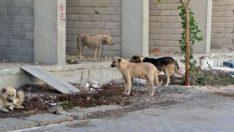 İş dönüşü 5 köpeğin saldırısına uğradı