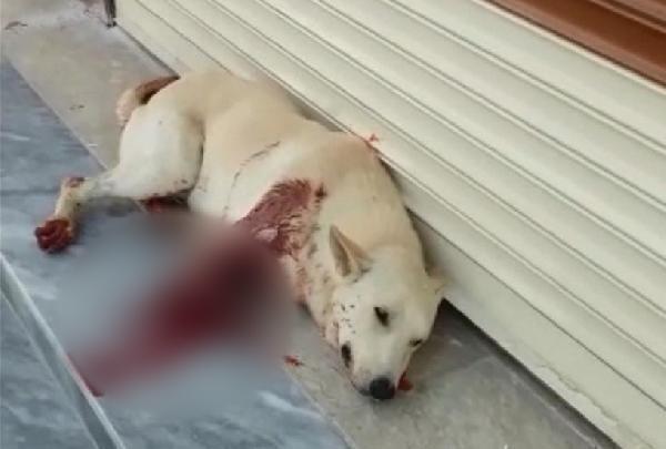 Şanlıurfa'da havlıyor diye köpeği av tüfeğiyle vurdu