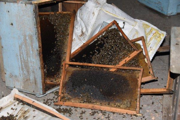 Şanlıurfa'da arı kovanları taşıyan kamyonet tırla çarpıştı